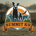 Talking Dogs With Devan Blazey from Summit K9 | Pandemic Playbook #5
